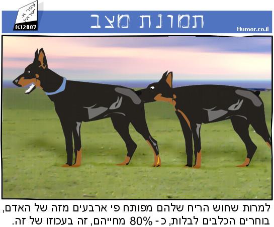 קומיקס : כלבים